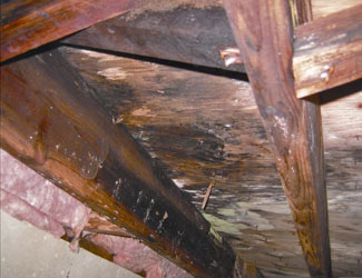 mold and rot in a Nepean crawl space